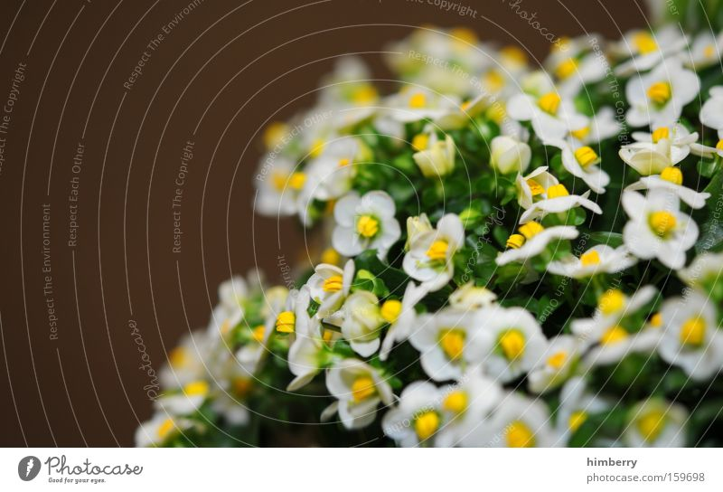 Nature Plant Beautiful Flower Spring Blossom Background picture Park Fresh Esthetic Botany Floristry Horticulture