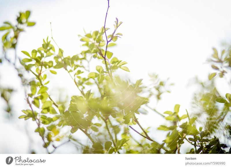 spring gold Environment Nature Landscape Plant Animal Sky Cloudless sky Sun Sunlight Spring Beautiful weather Tree Bushes Leaf Twig Garden Park Forest Wood