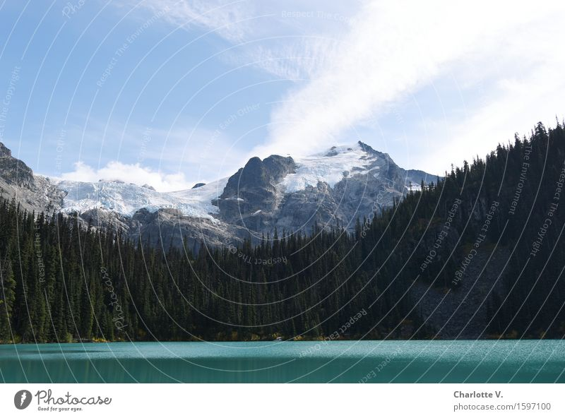 in the mountains Landscape Summer Beautiful weather Tree Coniferous forest Mountain Whistler Snowcapped peak Glacier Lake glacial lake Glittering Firm Fluid