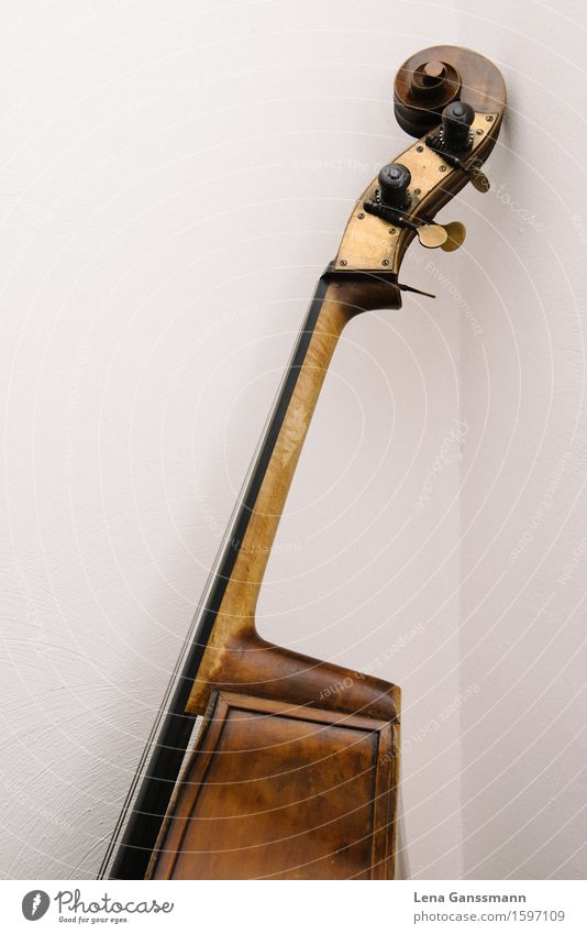 Head of a double bass Art Music Concert Musician Double bass String instrument Classical Jazz Wood Study Luxury Colour photo Interior shot Deserted