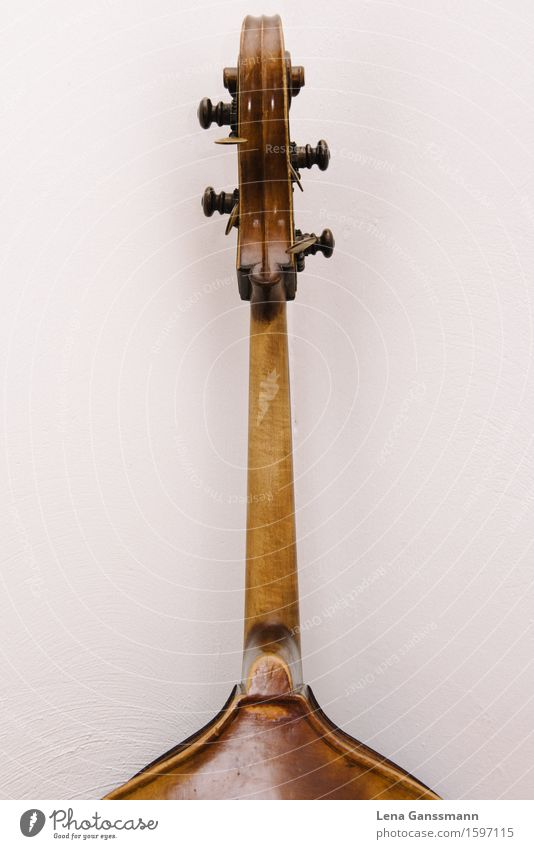 Head of a double bass - rear view Music Concert Musician Musical instrument Double bass String instrument Wood Listen to music Wait Brown Colour photo Deserted