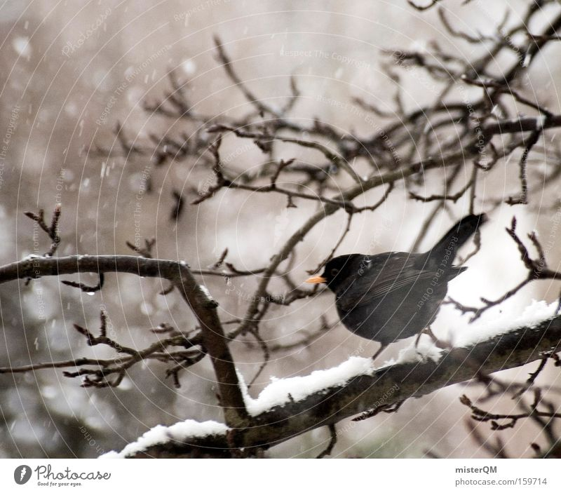 Winter Calm Loneliness Animal Snow Snowfall Sadness Bird Wait Wind Weather Break Survive Comfortless Trickle Blackbird