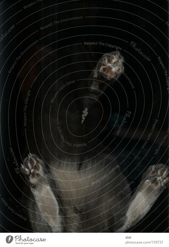 Black Gray Cat Under Pelt Paw Mammal Scan Cat's paw Dark background