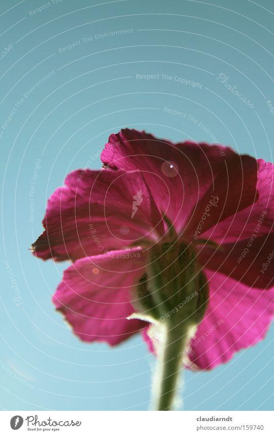 Flower Plant Summer Blossom Pink Perspective Stalk Blossoming Lighting effect