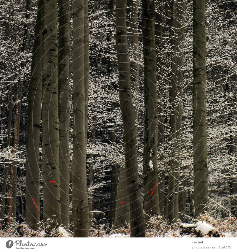 Tree Winter Leaf Forest Cold Snow Ice Environment Signs and labeling Frost Bushes Climate Branch Fir tree Frozen
