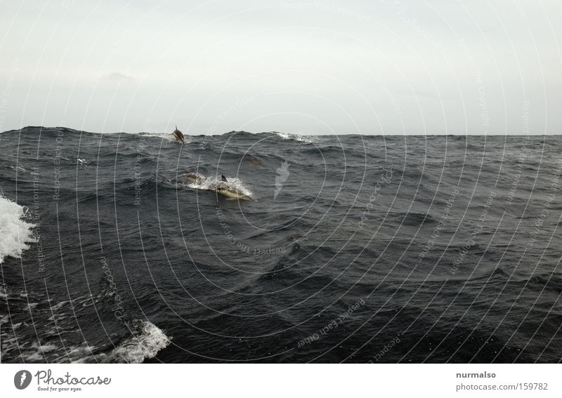 then on the Bay of Biscay Sail Sailboat Waves Ocean Atlantic Ocean Dolphin Jump Driving Travel photography Freedom Horizon Sea water Emotions Fish sea dweller
