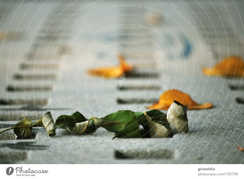 dry leaves Leaf Dry Orange Green Gray Mesh grid Concrete Shriveled Cold Autumn Transience Transport Exterior shot