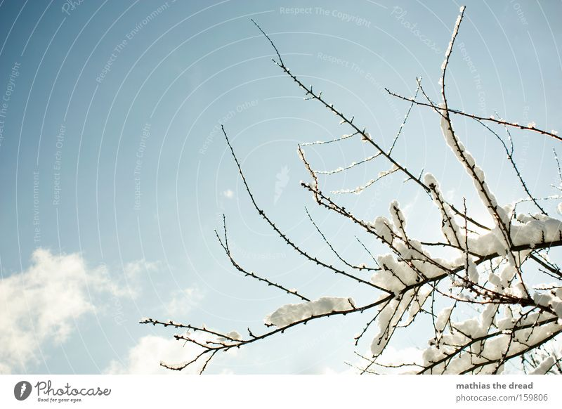 Beautiful Sky Tree Winter Clouds Cold Snow Branch Idyll Bleak Part of the plant