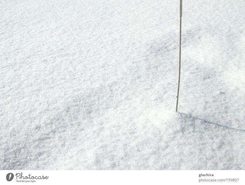 snowed Snow Cold White Flake Rod Stick Prickle Pierce Sharp Mountain Ice Empty Calm Winter Transience