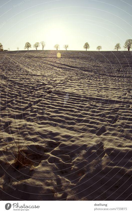 Winter Cold Snow Grass Field Horizon Tracks Footprint