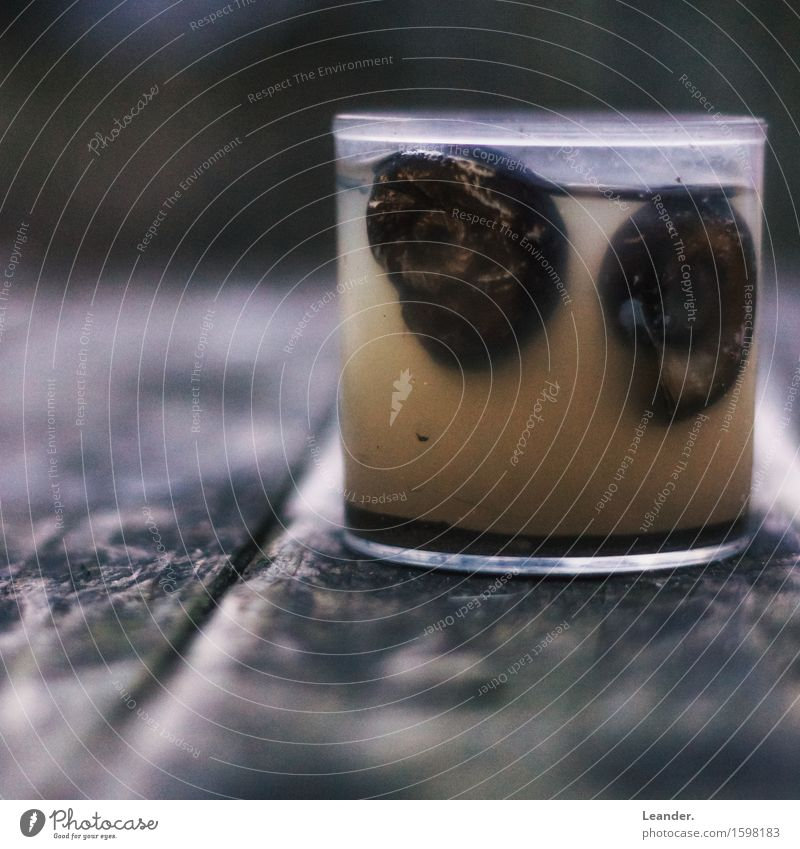 snail glass Snail Aquarium 2 Animal Glass Old Disgust Exotic Fantastic Curiosity Brown Adventure Discover Uniqueness Beautiful Death Crumpet Snail shell