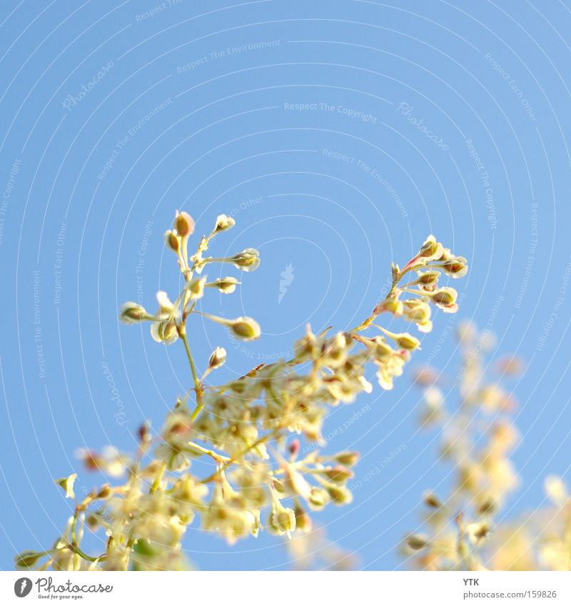 Sky Nature Blue Plant Summer Movement Blossom Lighting Spring Growth Wind Tall Beginning Blossoming Soft Bud