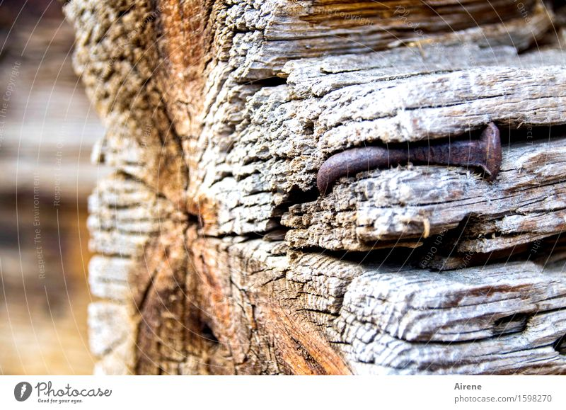 mad House building Redecorate Wooden wall Village Hut Farm Joist Nail Rust Old Broken Brown Gray Fiasco Decline Tilt Warped Bend Curved Weathered Defective