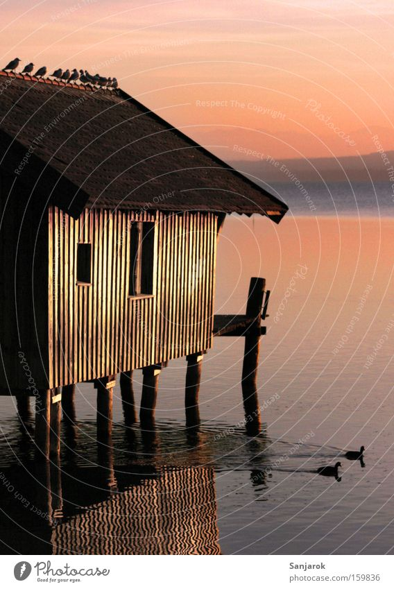 Calm Lake Bird Pair of animals In pairs Romance Peace Hut Footbridge Seagull Dusk Duck Bavaria Pole Wooden house Shed
