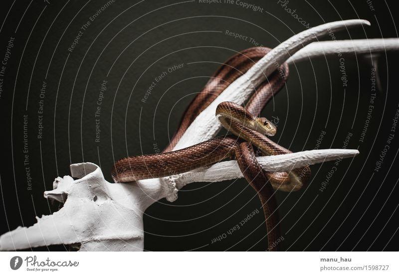 """hanging around Exotic Environment Animal Pet Snake 1 Hunting Esthetic Exceptional Voracious Elegant Surrealism Antlers Colour photo Interior shot Deserted"