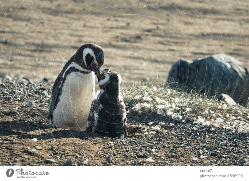 Animal Baby animal Coast Together Friendship To enjoy Cleaning Touch Safety (feeling of) Wake up Acceptance Penguin