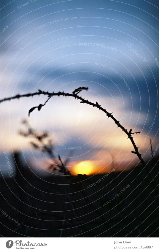 Sky Nature Beautiful Sun Black Think Dream Time Gold Glittering Hope Round Romance Transience Warm-heartedness Fatigue