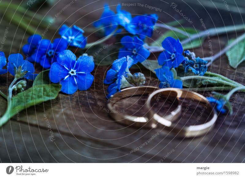 Don't forget my flowers with two wedding rings, engagement rings on a wooden table Feasts & Celebrations Wedding Plant Flower Leaf Blossom Wood Blue Gold Trust