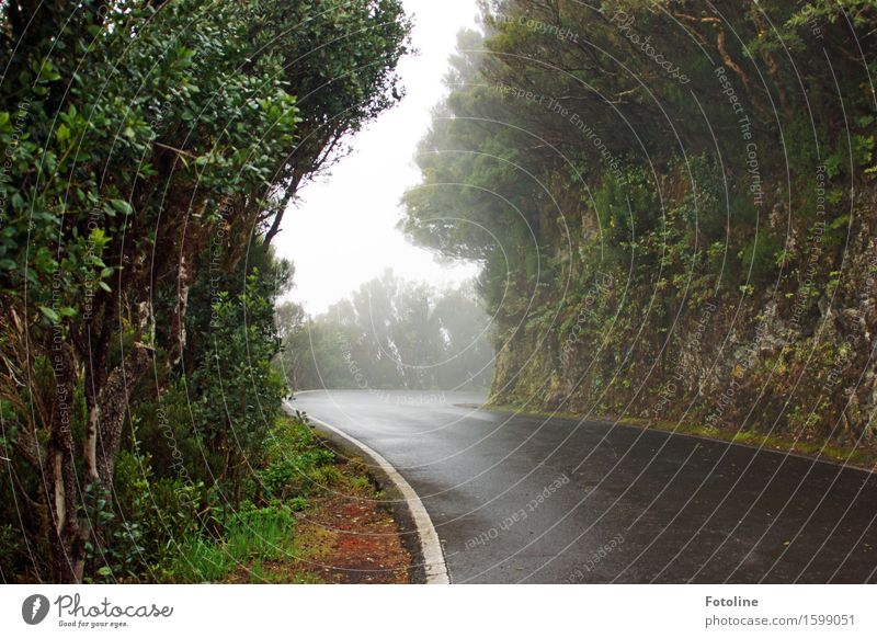 Road to nowhere Environment Nature Landscape Plant Elements Earth Sky Fog Tree Grass Wild plant Meadow Forest Virgin forest Rock Cold Natural Street Asphalt