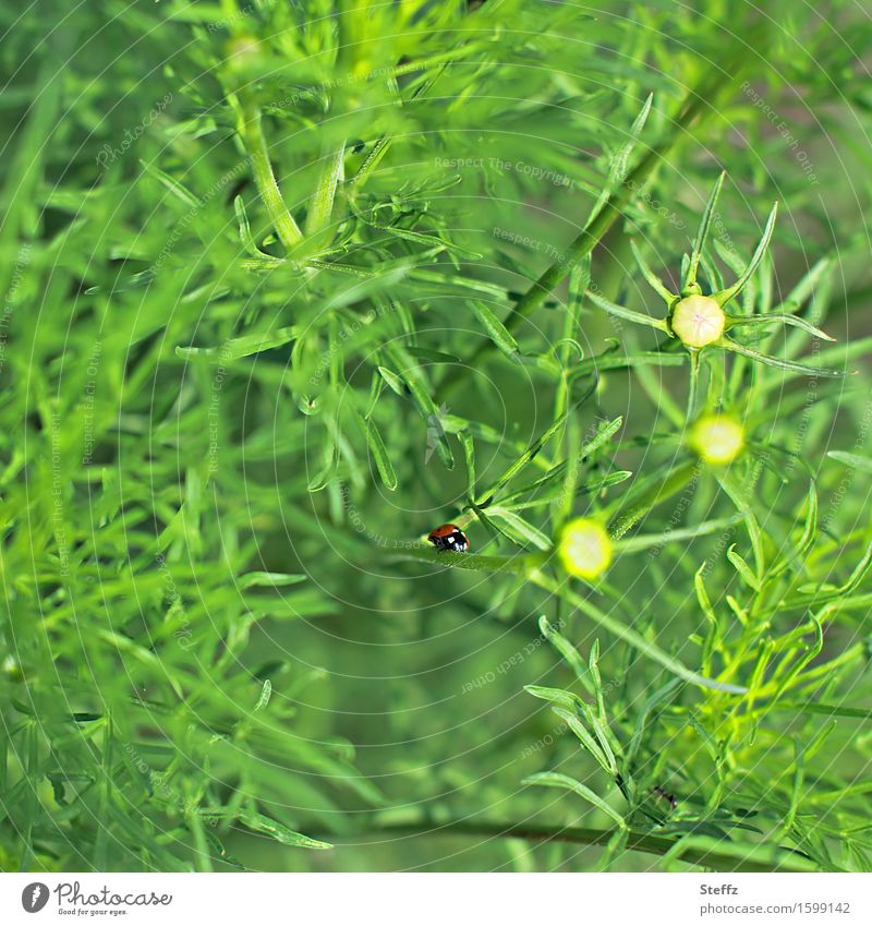 Nature Plant Green Summer Happy Small Crawl Beetle Ladybird Patch of colour Wild plant Good luck charm Grass green Summer feeling