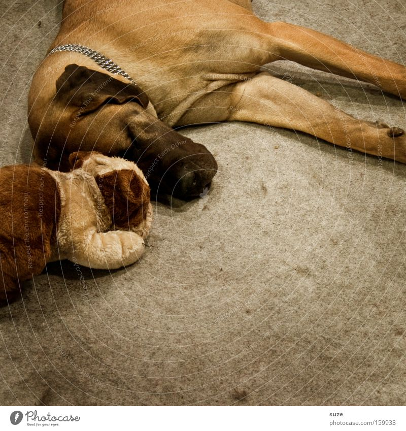Dog Animal Friendship Dream Together Lie Sleep Pelt Pet Mammal Loyalty Snout Cuddling Love of animals Teddy bear Rest