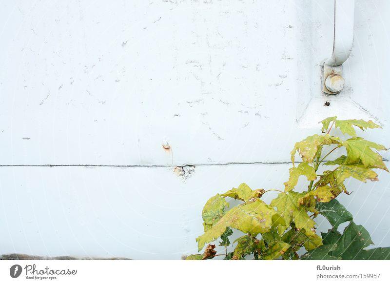 Nature White Green Leaf Metal Broken Car door Transience Derelict Rust Door handle Scratch mark