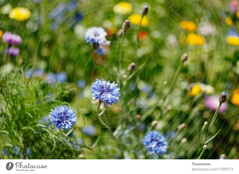 Nature Plant Blue Green Summer Flower Yellow Blossom Natural Grass Garden Pink Growth Esthetic Blossoming Beautiful weather