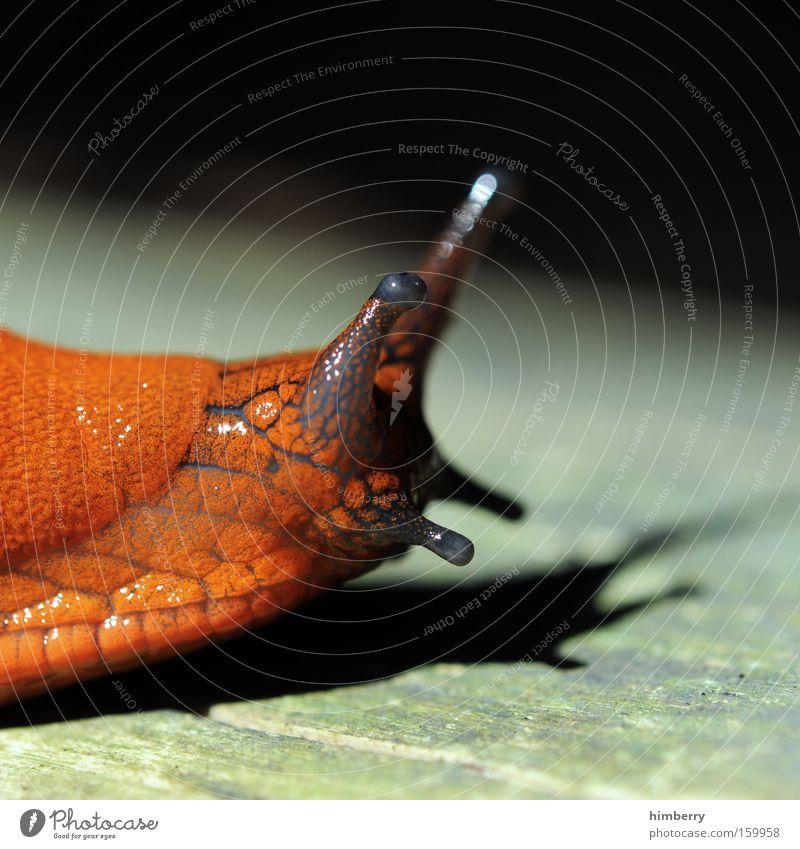 Nature Animal Snail Feeler Mucus Mollusk Suck-up