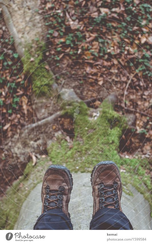 upside down Leisure and hobbies Adventure Environment Nature Spring Tree Leaf Root Tree trunk Moss Forest Hiking boots Relaxation Hang Sit Break Colour photo