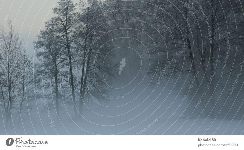 Nature Tree Landscape Winter Snow Fog Grief Landscape format