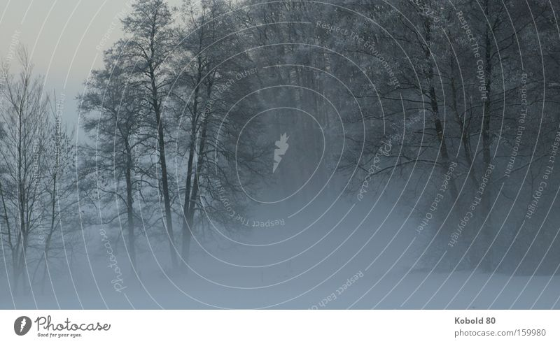 The silence in the fog Fog Nature Tree Winter Snow Silhouette Grief Landscape Landscape format Silence Silence