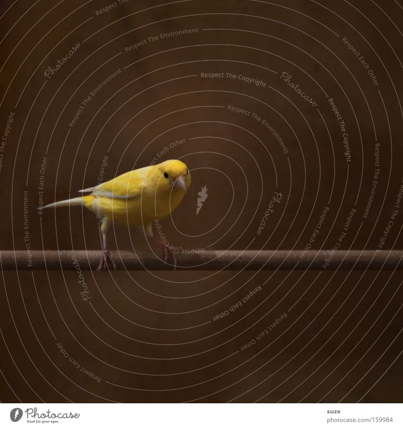 Beautiful Loneliness Animal Yellow Funny Small Brown Bird Sit Authentic Wait Cute Curiosity Concentrate Pet Animalistic
