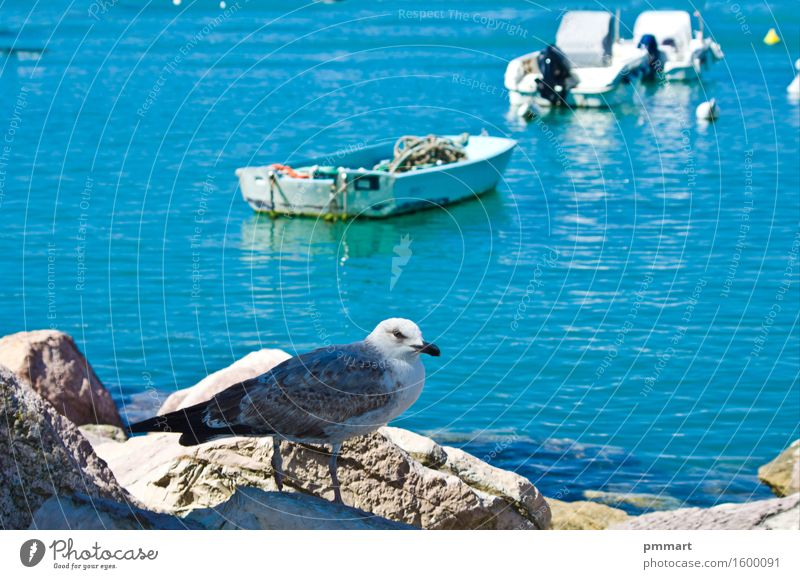 Seagull resting on a rock Sky Nature Vacation & Travel Blue Sun Ocean Landscape Animal Beach Natural Coast Stone Bird Rock Watercraft Horizon