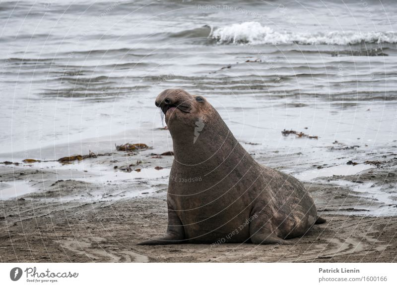 Sea Lion in California Nature Summer Beautiful Landscape Ocean Relaxation Animal Calm Beach Environment Coast Sand Tourism Wild Weather Contentment