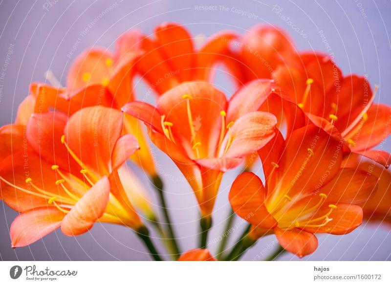 Plant Beautiful Flower Blossom Exceptional Elegant Round Exotic Curve Fine Houseplant Calyx