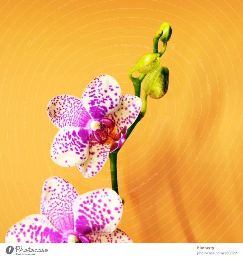 Nature Flower Plant Blossom Wellness Decoration Craft (trade) Seasons Orchid Horticulture Desire Ambient Congratulations Floristry
