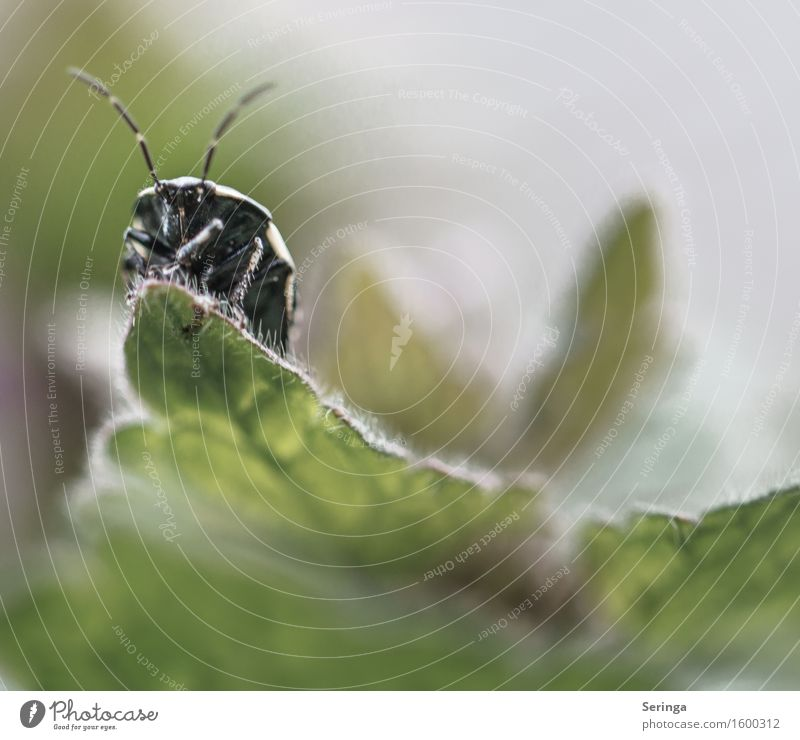 vantage point Nature Plant Animal Spring Ivy Fern Leaf Wild animal Beetle Animal face 1 Crawl Insect Colour photo Subdued colour Multicoloured Exterior shot