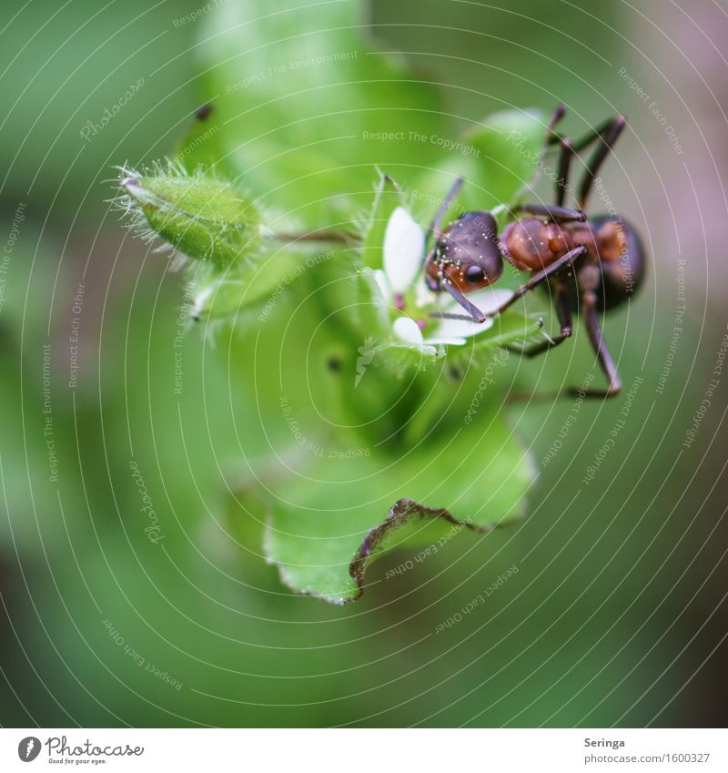 Acrobatic of an A-Meise Plant Grass Bushes Leaf Blossom Wild plant Animal Farm animal Wild animal Beetle Animal face Wing 1 Work and employment Crawl Ant
