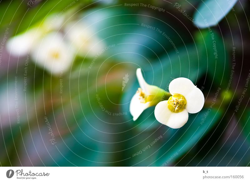 Nature White Flower Green Plant Yellow Colour