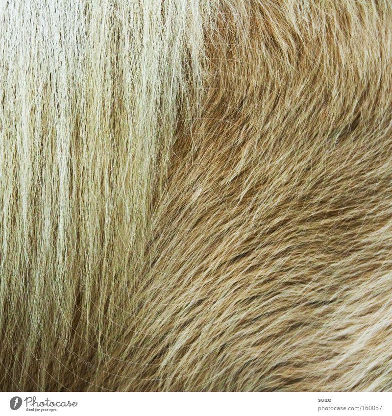 Animal Bright Wild Wild animal Soft Protection Horse Pelt Mammal Cuddly Pony Beige Mane Slick Winter pelt