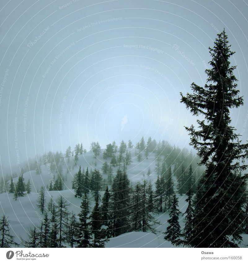 Sky Tree Winter Calm Forest Snow Mountain Landscape Fog Branch Hill Haze Covered Coniferous forest