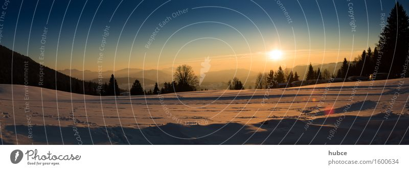 Nature Vacation & Travel Blue Sun Landscape Forest Meadow Snow Happy Moody Horizon Contentment Gold Perspective Fantastic Joie de vivre (Vitality)