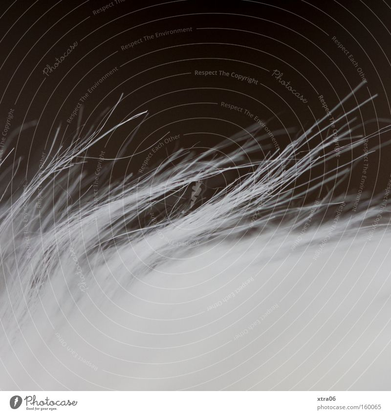 bristly-soft Pelt White Tiny hair Macro (Extreme close-up) Thread Close-up synthetic fur