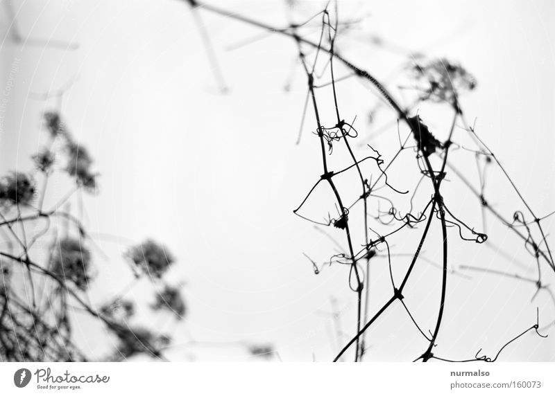 Graphical Worlds Branch Bushes Virgin forest Winter Bleak Empty Death Analog Few Simple Black & white photo Quality 25ASA semitone essentials