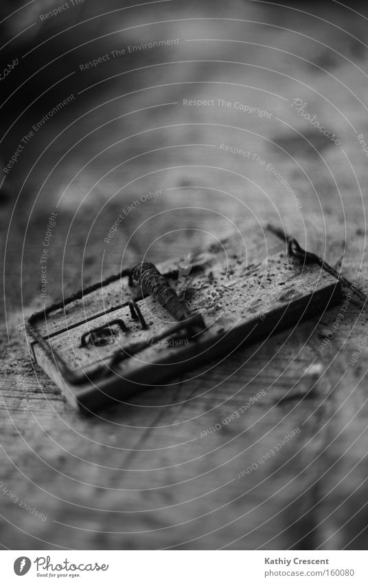 One step too far. Mouse trap Ambush Death Dirty Wood Black & white photo Fear Panic Dangerous as dead as a doornail