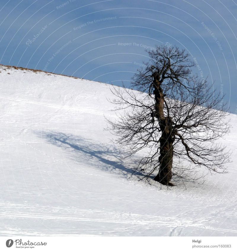 sunny winter day... Winter Cold Snow Frost Tree Tree trunk Headstrong Shadow Mountain Sky White Blue Helgi