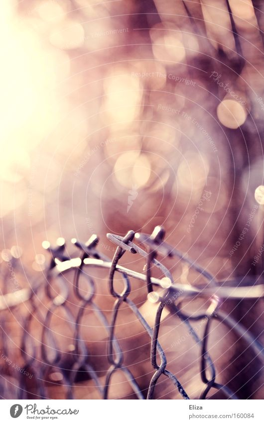 Dream of the fence. Wire netting Fence Sun Detail Metal Metalware Blur Pink Morning Leaf Autumn Light Tilt