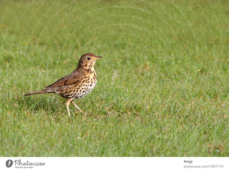 Nature Plant Green White Loneliness Animal Environment Life Spring Movement Natural Grass Garden Freedom Brown Bird