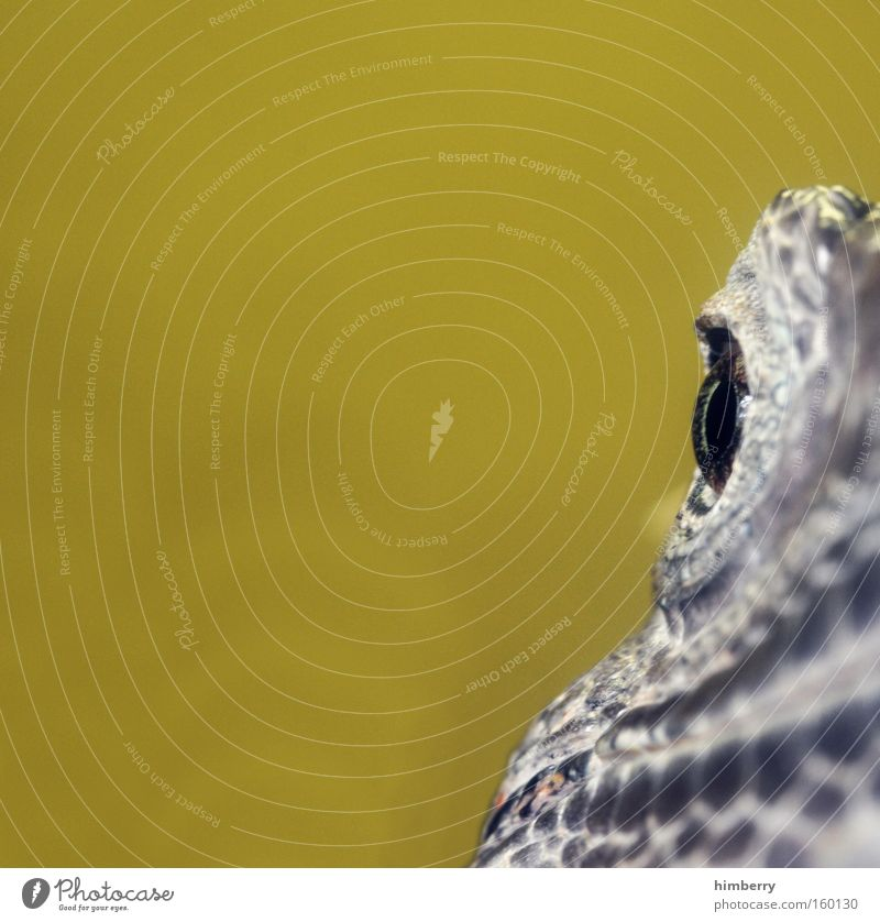 Eyes Animal Head Fear Zoo Exotic Saurians Panic Reptiles Armor-plated Terrarium Scales Iguana Amphibian Camouflage colour