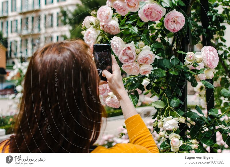 Rose Garden Photography Trip Summer Feminine Head Hair and hairstyles 1 Human being 18 - 30 years Youth (Young adults) Adults Flower Park Small Town Long-haired